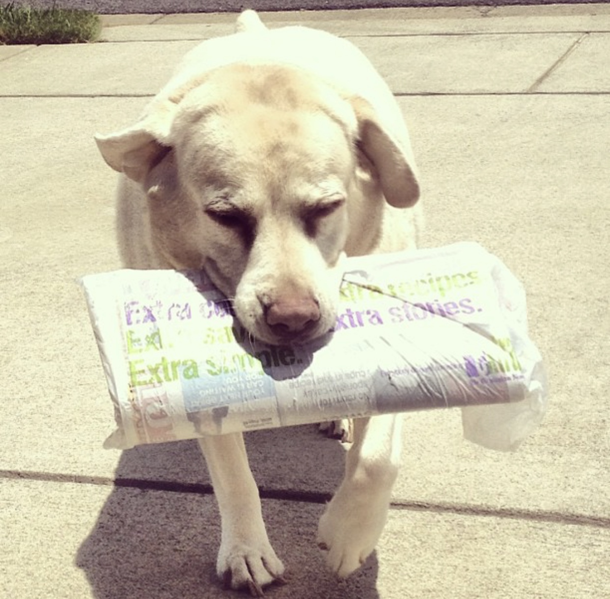 Fetching the daily paper.